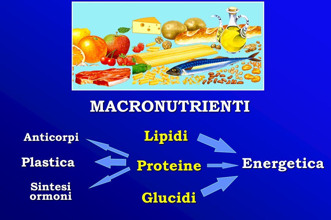 MACRONUTRIENTI Lipidi Energetica Proteine Glucidi Plastica Sintesi ormoni Anticorpi