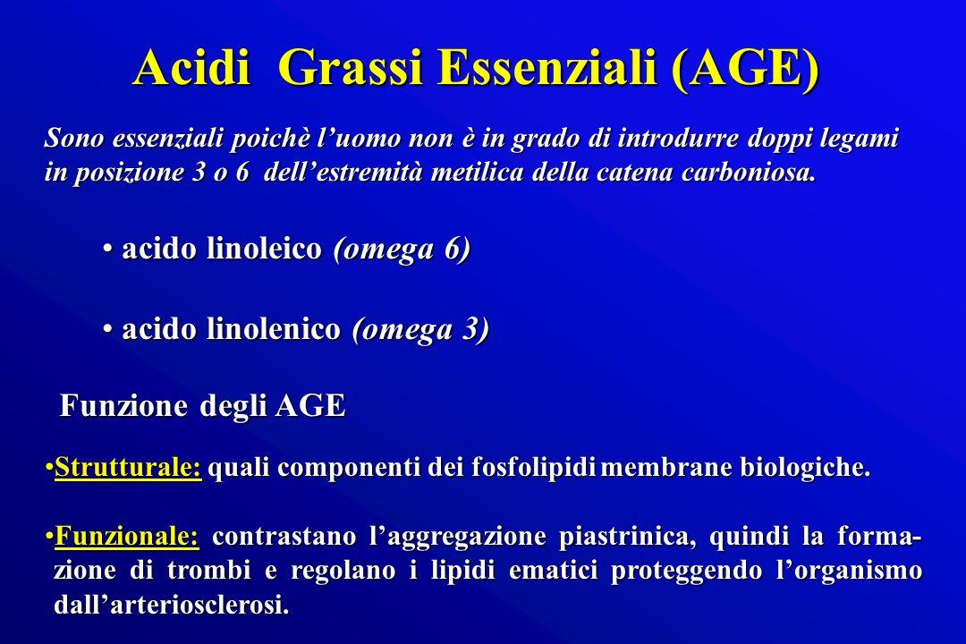 Acidi Grassi Essenziali (AGE) Sono essenziali poichè luomo non è in grado di introdurre doppi legami in posizione 3 o 6 dellestremità metilica della c
