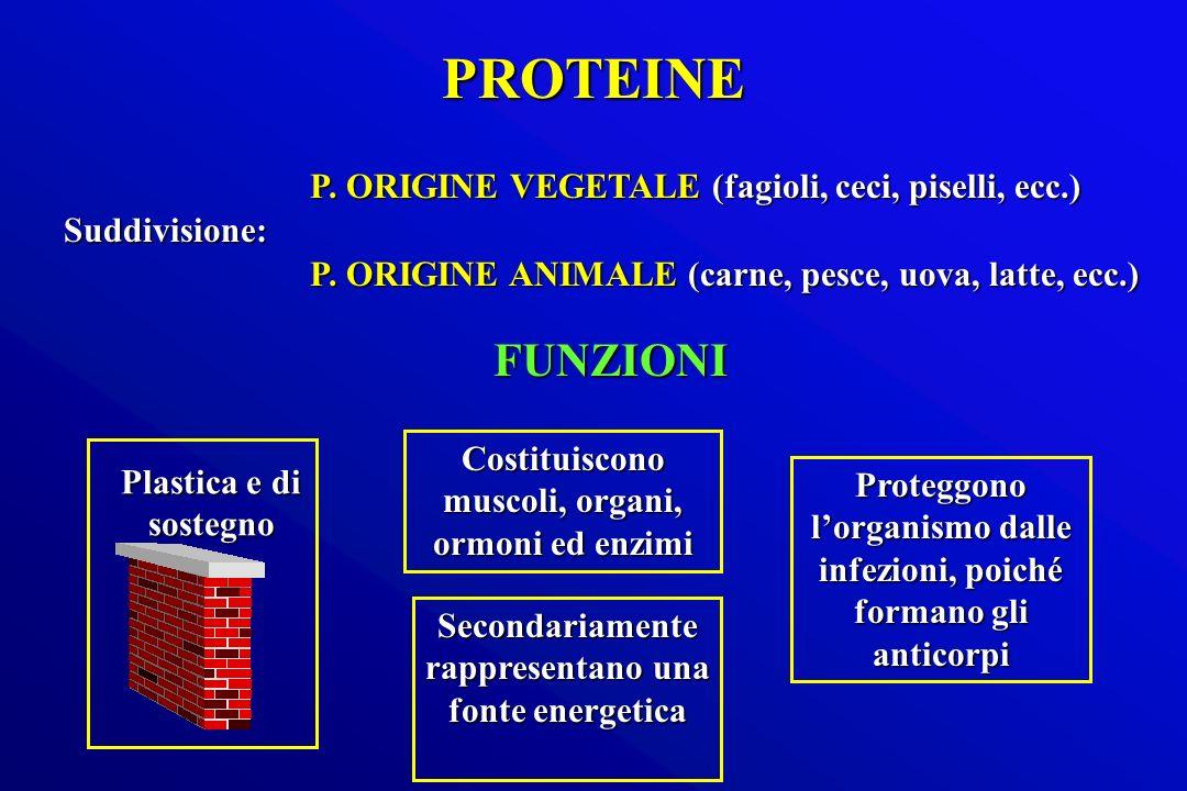PROTEINE Suddivisione: P. ORIGINE VEGETALE (fagioli, ceci, piselli, ecc.) P. ORIGINE ANIMALE (carne, pesce, uova, latte, ecc.) Costituiscono muscoli,
