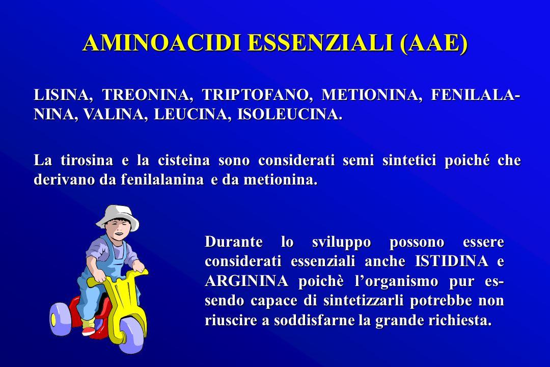 LISINA, TREONINA, TRIPTOFANO, METIONINA, FENILALA- NINA, VALINA, LEUCINA, ISOLEUCINA. La tirosina e la cisteina sono considerati semi sintetici poiché