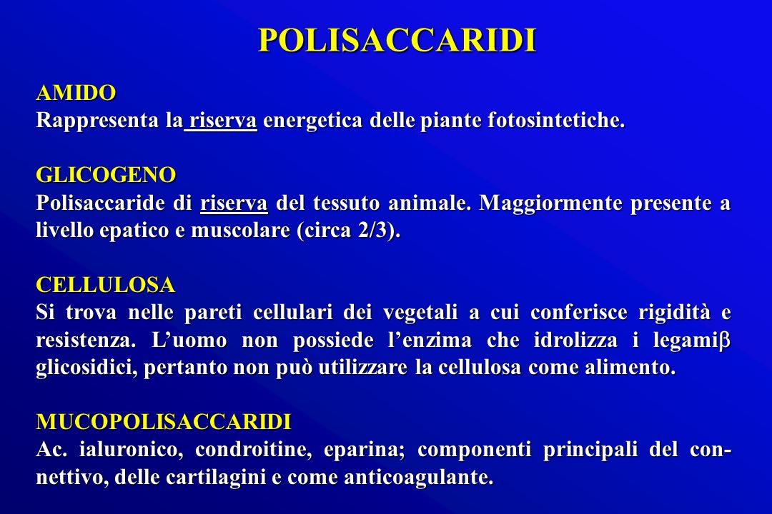 AMIDO Rappresenta la riserva energetica delle piante fotosintetiche. GLICOGENO Polisaccaride di riserva del tessuto animale. Maggiormente presente a l