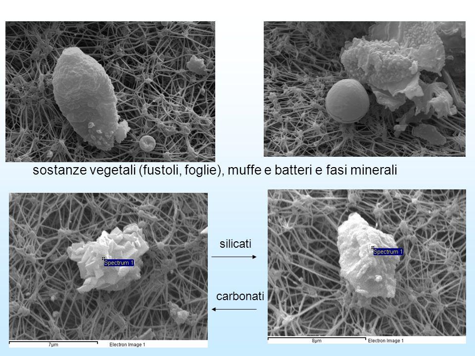 particelle argillose particelle organiche (pollini, muffe, batteri)