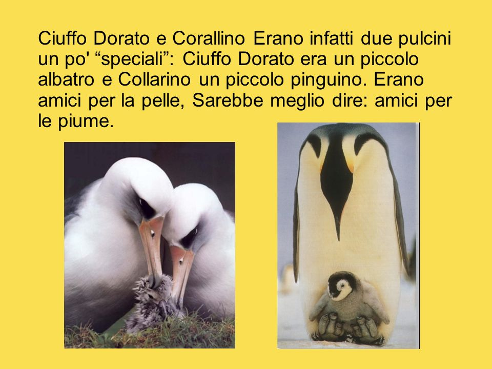 Ciuffo Dorato e Corallino Erano infatti due pulcini un po' speciali: Ciuffo Dorato era un piccolo albatro e Collarino un piccolo pinguino. Erano amici