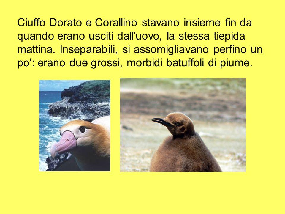 Ciuffo Dorato e Corallino stavano insieme fin da quando erano usciti dall'uovo, la stessa tiepida mattina. Inseparabili, si assomigliavano perfino un