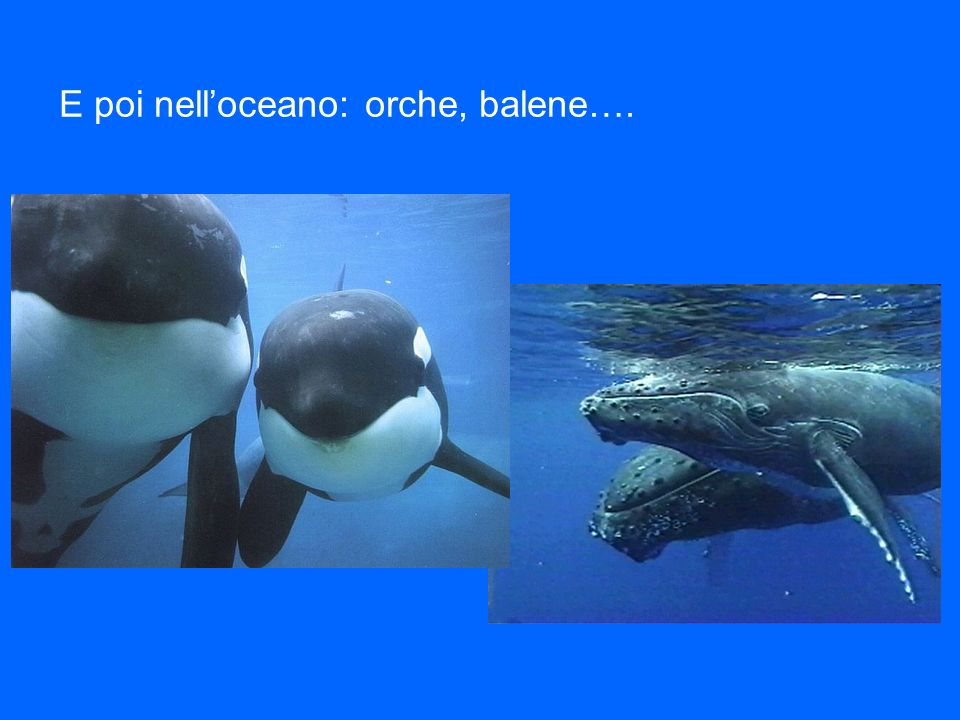 E poi nelloceano: orche, balene….