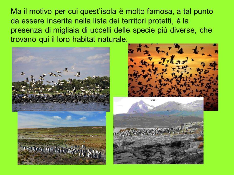 Ma il motivo per cui questisola è molto famosa, a tal punto da essere inserita nella lista dei territori protetti, è la presenza di migliaia di uccell