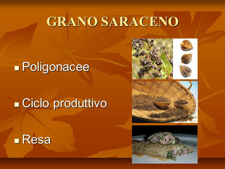 GRANO SARACENO Poligonacee Poligonacee Ciclo produttivo Ciclo produttivo Resa Resa