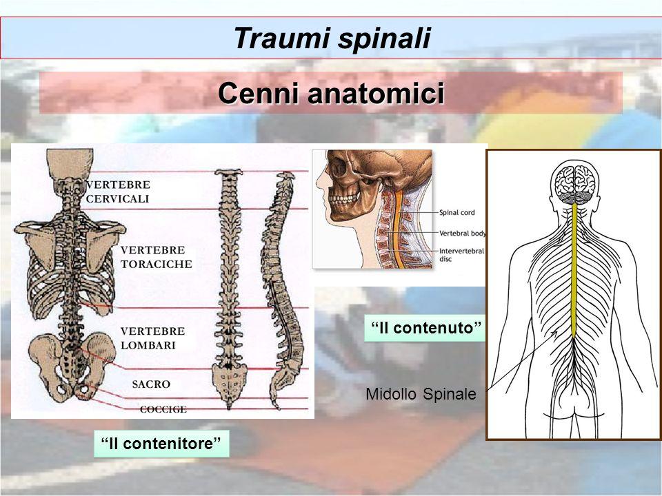Traumi spinali Cenni anatomici Il contenitore Il contenuto Midollo Spinale