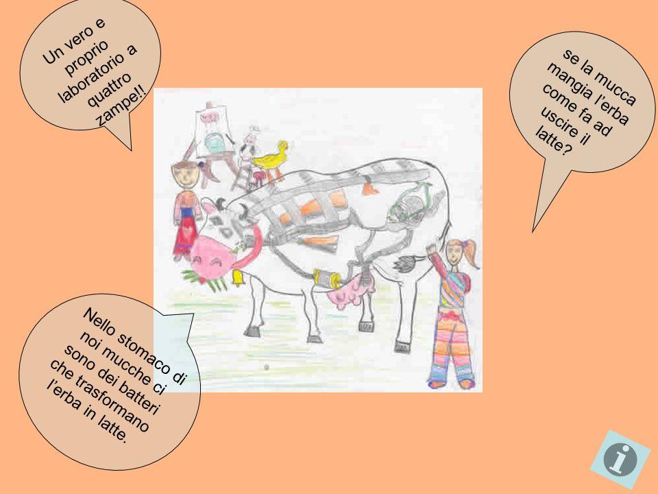 Le mucche di razza Frisona come me…fanno il latte più buono.