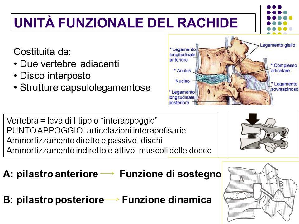 UNITÀ FUNZIONALE DEL RACHIDE Costituita da: Due vertebre adiacenti Disco interposto Strutture capsulolegamentose Vertebra = leva di I tipo o interappo