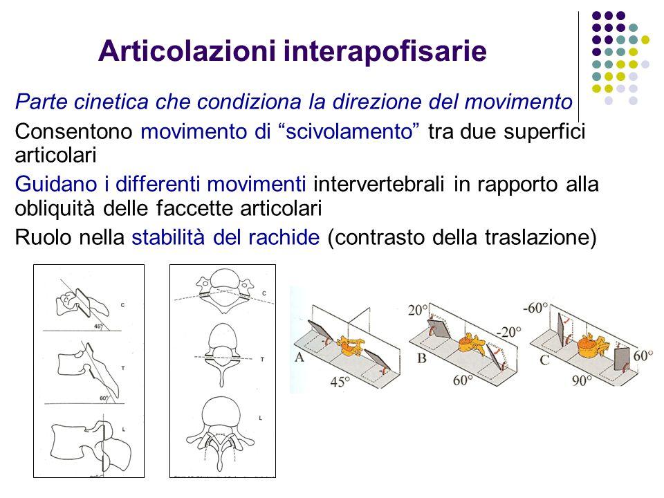 Articolazioni interapofisarie Parte cinetica che condiziona la direzione del movimento Consentono movimento di scivolamento tra due superfici articola