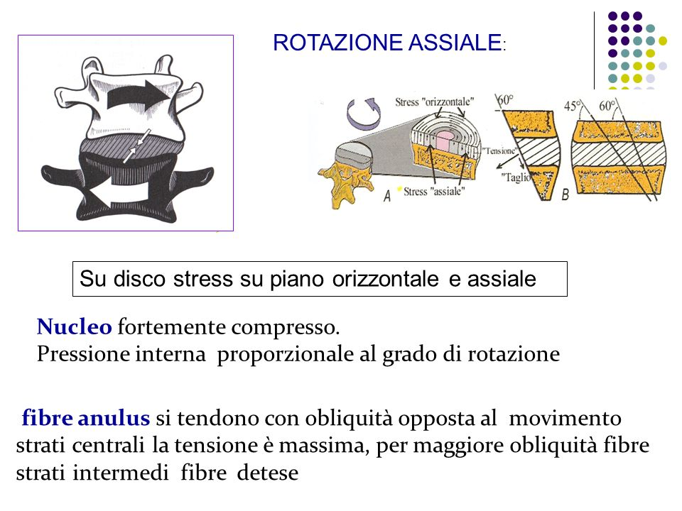 fibre anulus si tendono con obliquità opposta al movimento strati centrali la tensione è massima, per maggiore obliquità fibre strati intermedi fibre