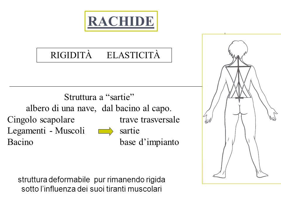 forze che agiscono sul corpo umano, permettono i movimenti fra segmenti corporei forze esterne (rappresentano le interazioni fra il corpo del soggetto e l ambiente) : -forza di gravità; -reazioni vincolari (forze scambiate fra piede e terreno); forze interne : -forze di contrazione muscolare; -forze di tensione nei legamenti; -forze scambiate tra segmenti ossei adiacenti attraverso le superfici articolari.