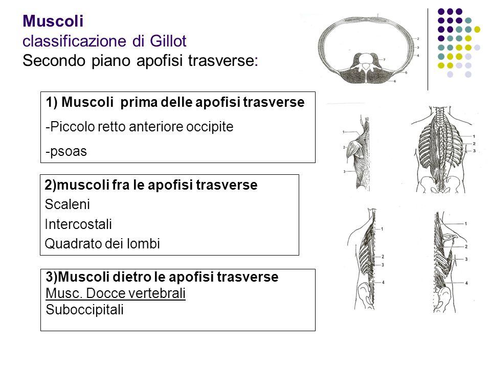Muscoli classificazione di Gillot Secondo piano apofisi trasverse: 3)Muscoli dietro le apofisi trasverse Musc. Docce vertebrali Suboccipitali 1) Musco