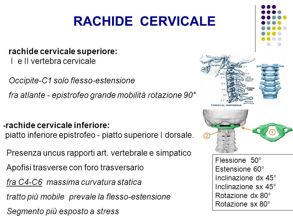 RACHIDE CERVICALE rachide cervicale superiore: I e II vertebra cervicale Occipite-C1 solo flesso-estensione fra atlante - epistrofeo grande mobilità r