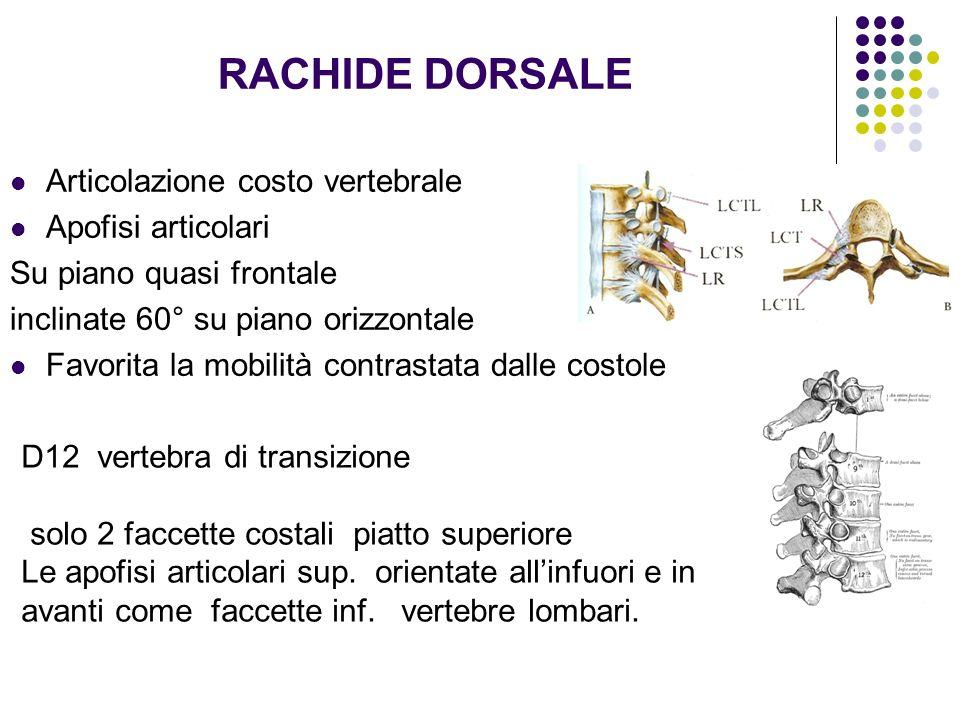 RACHIDE DORSALE Articolazione costo vertebrale Apofisi articolari Su piano quasi frontale inclinate 60° su piano orizzontale Favorita la mobilità cont