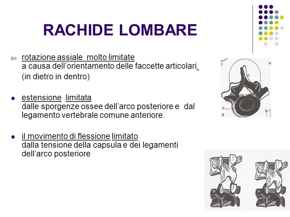 RACHIDE LOMBARE rotazione assiale molto limitate a causa dellorientamento delle faccette articolari. (in dietro in dentro) estensione limitata dalle s