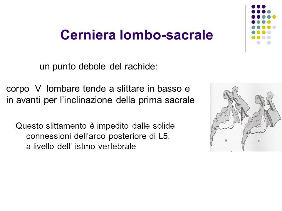 Cerniera lombo-sacrale Questo slittamento è impedito dalle solide connessioni dellarco posteriore di L5, a livello dell istmo vertebrale un punto debo