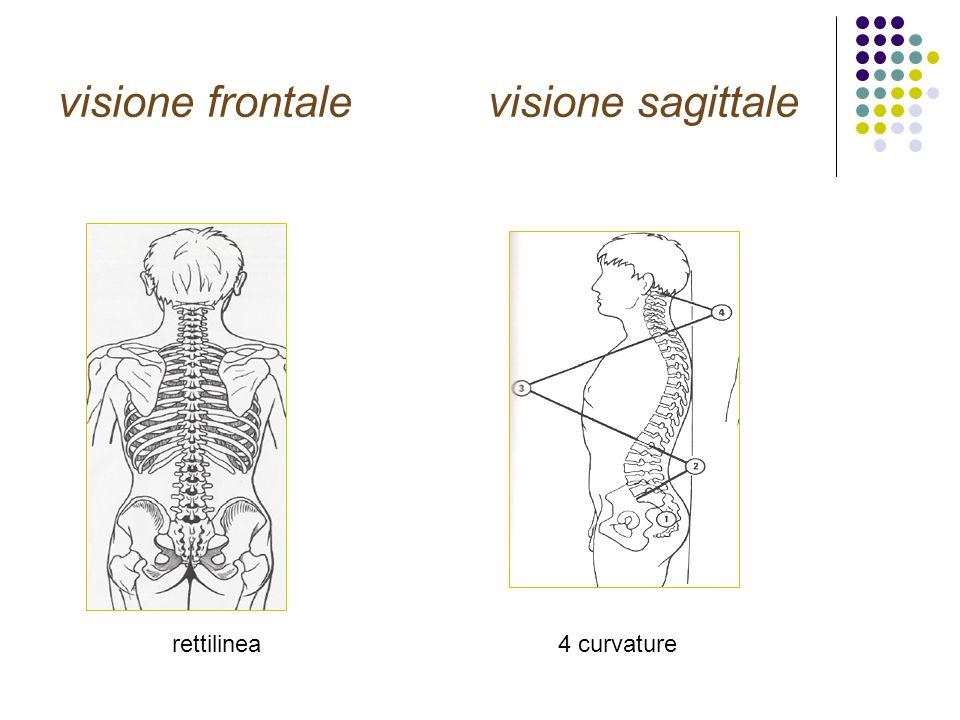 Arco posteriore legamento giallo Collega lamine,chiude canale Spesso ed elastico (80% elastina) Protezioni bordo posteriore forame coniugazione elementi nervosi in flessione SISTEMA LEGAMENTOSO