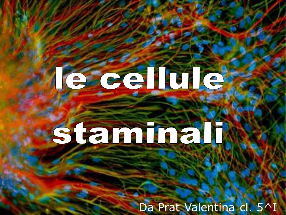 Da Prat Valentina cl. 5^I