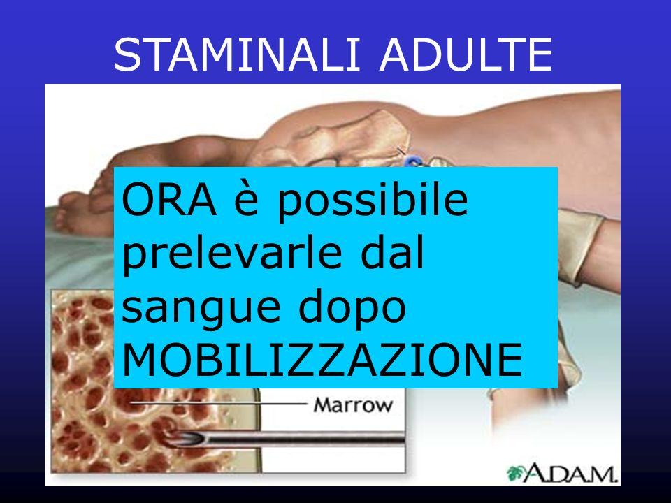 STAMINALI ADULTE ORA è possibile prelevarle dal sangue dopo MOBILIZZAZIONE