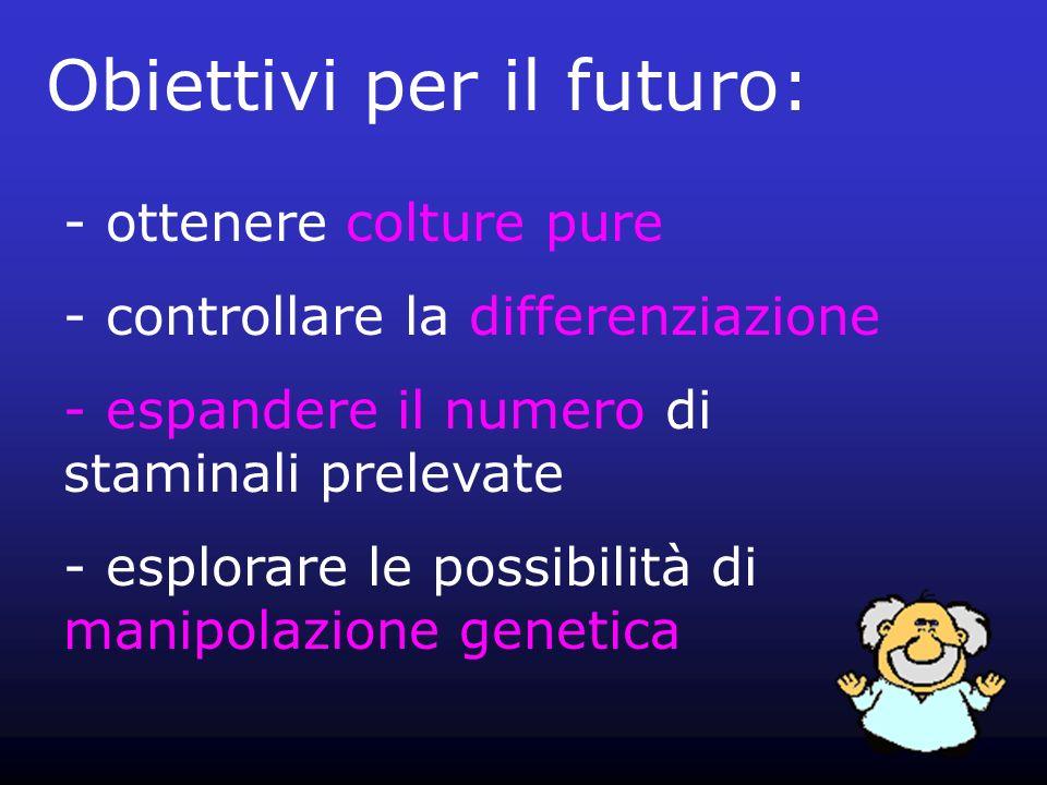 Obiettivi per il futuro: - ottenere colture pure - controllare la differenziazione - espandere il numero di staminali prelevate - esplorare le possibi