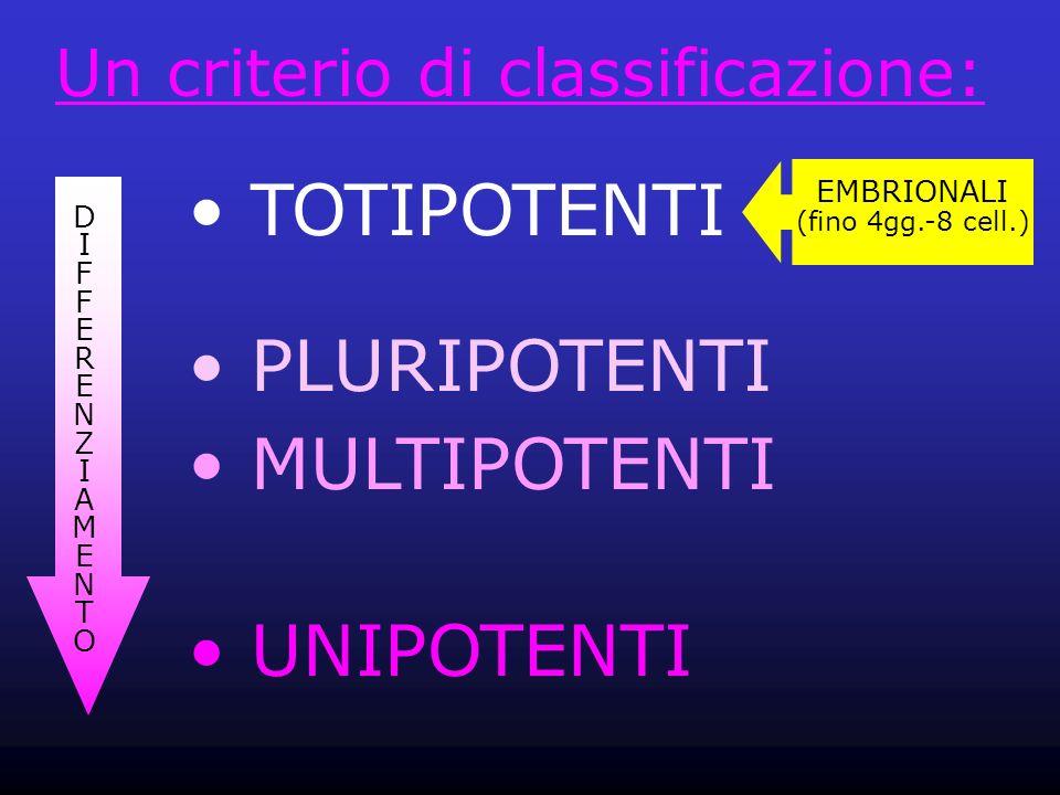 TOTIPOTENTI PLURIPOTENTI MULTIPOTENTI UNIPOTENTI Un criterio di classificazione: DIFFERENZIAMENTODIFFERENZIAMENTO EMBRIONALI (fino 4gg.-8 cell.)