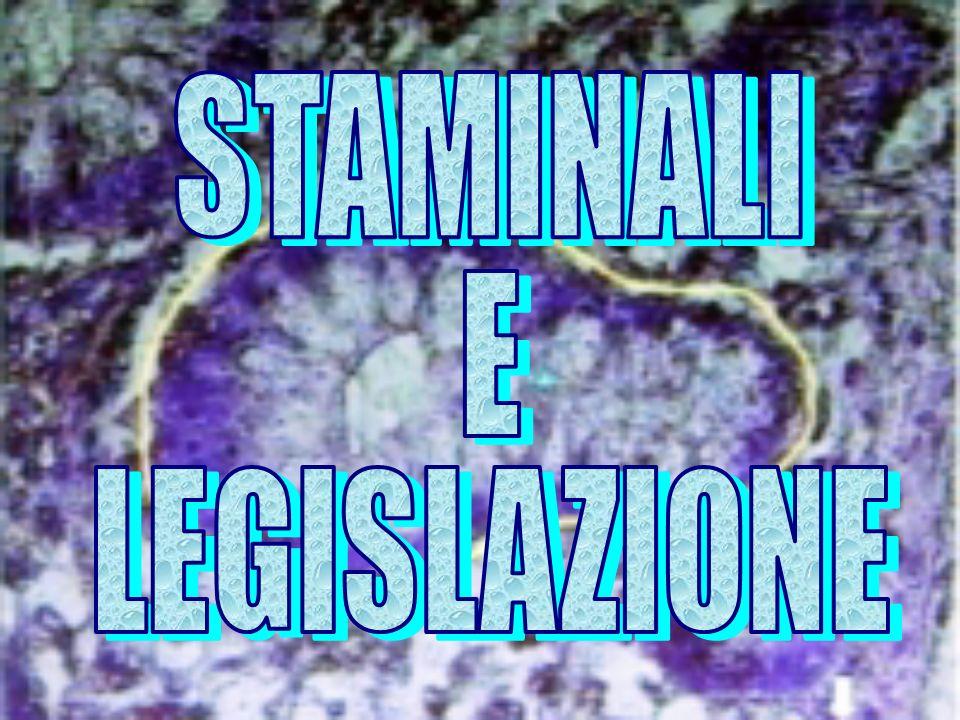 UNIONE EUROPEA NO CLONAZIONE ESSERI UMANI NO COMMERCIO EMBRIONI O CELLULE STAMINALI L AUTORIZZAZIONE ALLA RICERCA DIPENDE DAI VARI PAESI NO SELEZIONE EUGENETICA DEGLI EMBRIONI
