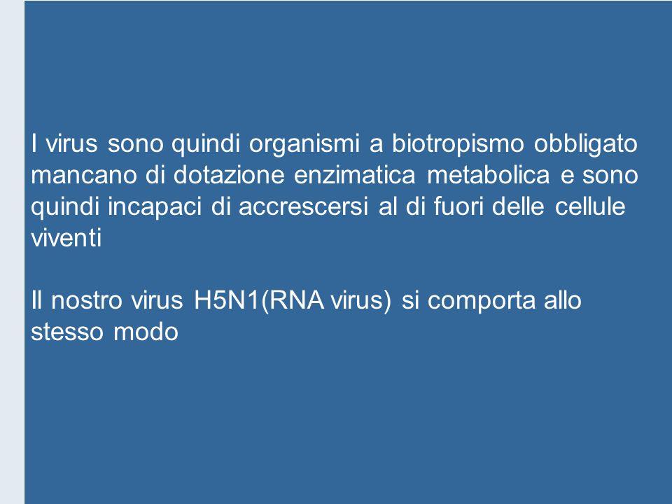 I virus sono quindi organismi a biotropismo obbligato mancano di dotazione enzimatica metabolica e sono quindi incapaci di accrescersi al di fuori del