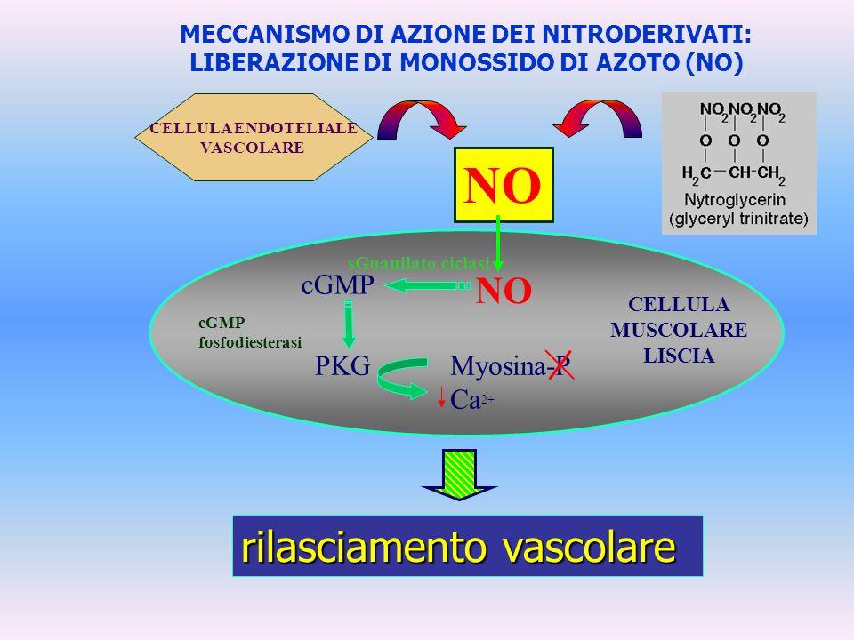 CELLULA MUSCOLARE LISCIA NO cGMP PKGMyosina-P Ca 2+ cGMP fosfodiesterasi sGuanilato ciclasi rilasciamento vascolare MECCANISMO DI AZIONE DEI NITRODERI
