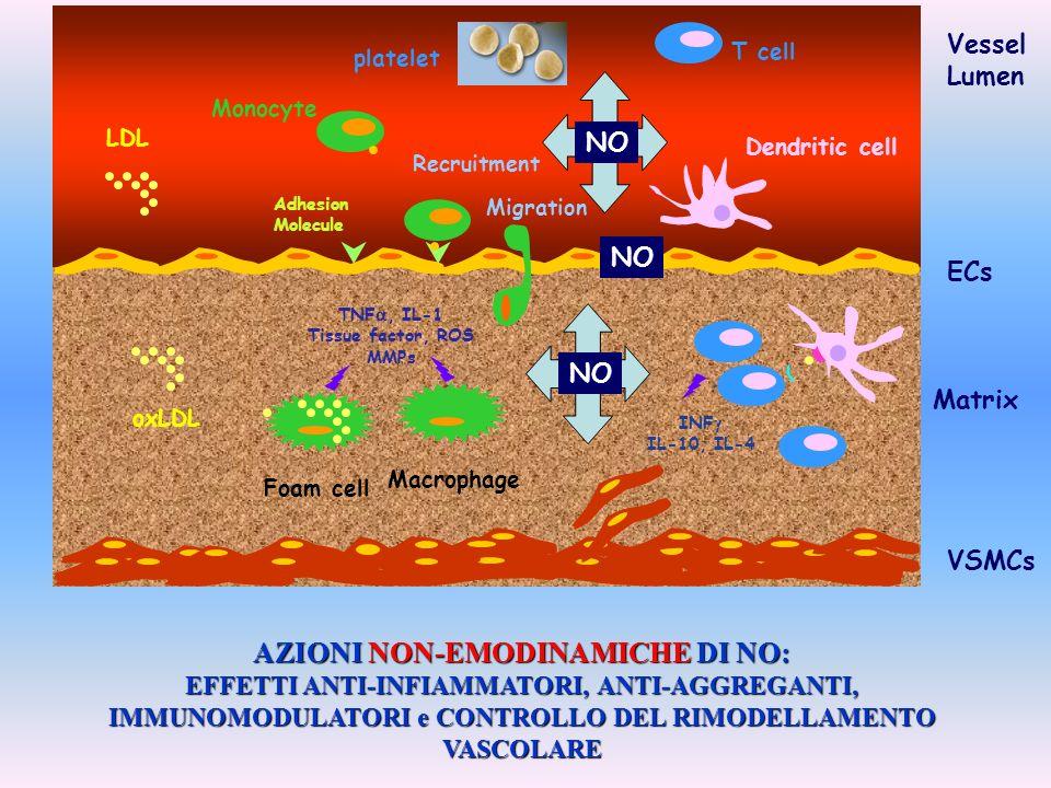 VSMCs ECs Monocyte Adhesion Molecule T cell Matrix Dendritic cell Macrophage Migration Foam cell Recruitment Vessel Lumen LDL oxLDL TNF, IL-1 Tissue f