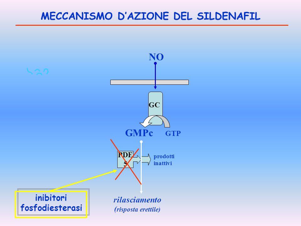 rilasciamento ( risposta erettile) GTP GMPc NO PDE 5 prodotti inattivi MECCANISMO DAZIONE DEL SILDENAFIL GC inibitori fosfodiesterasi