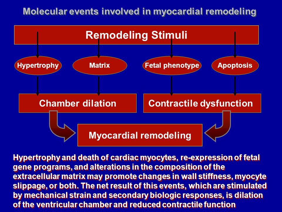 Remodeling Stimuli HypertrophyFetal phenotypeApoptosisMatrix Chamber dilationContractile dysfunction Myocardial remodeling Hypertrophy and death of ca