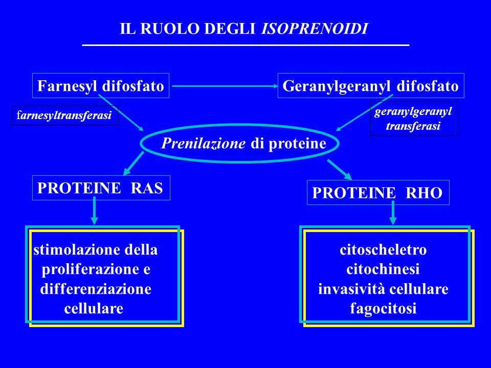 Farnesyl difosfatoGeranylgeranyl difosfato Prenilazione di proteine PROTEINE RAS PROTEINE RHO stimolazione della proliferazione e differenziazione cellulare citoscheletro citochinesi invasività cellulare fagocitosi IL RUOLO DEGLI ISOPRENOIDI farnesyltransferasi geranylgeranyl transferasi