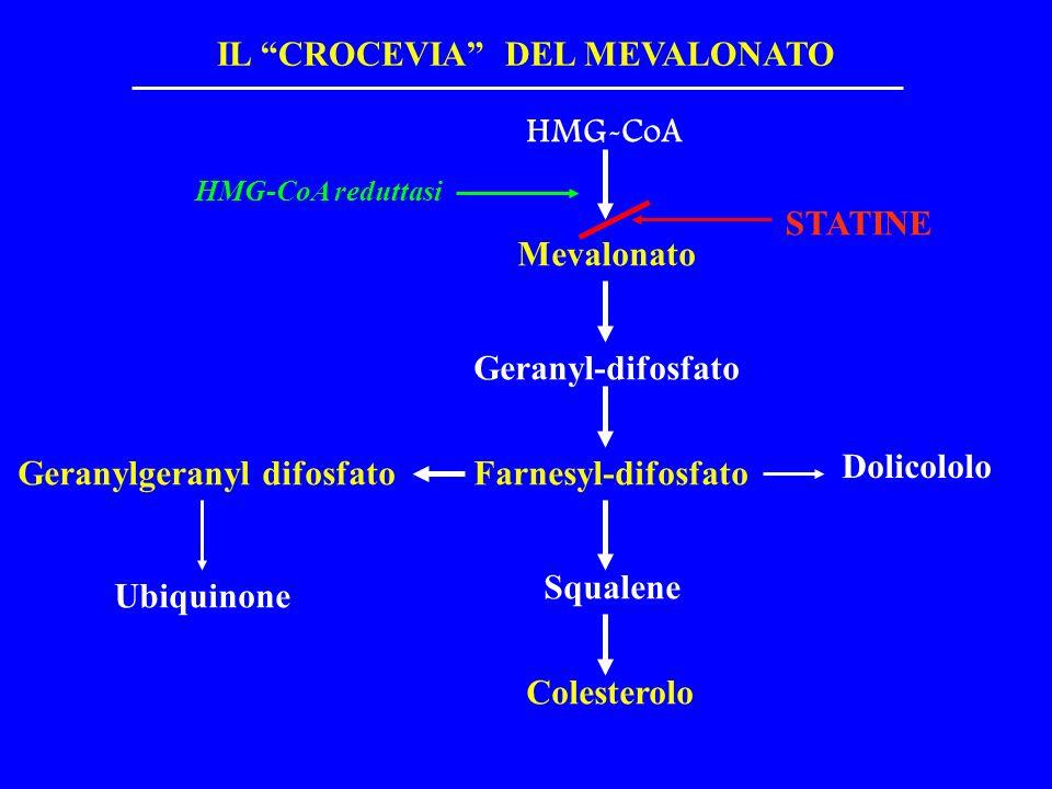 HMG-CoA Mevalonato Geranyl-difosfato HMG-CoA reduttasi STATINE Farnesyl-difosfato Squalene Colesterolo Dolicololo Geranylgeranyl difosfato Ubiquinone IL CROCEVIA DEL MEVALONATO