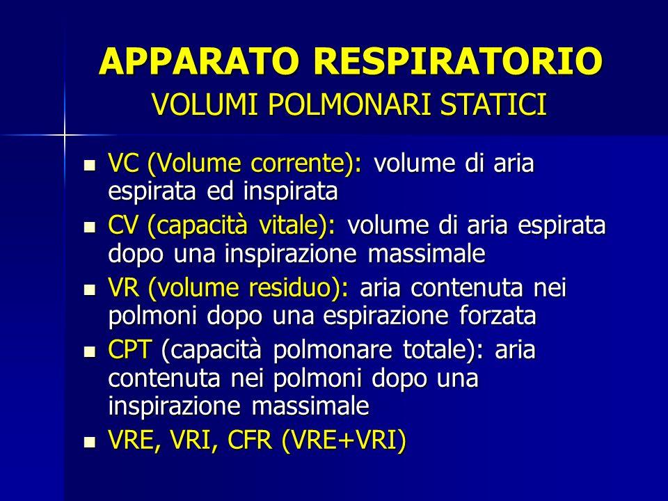 VC (Volume corrente): volume di aria espirata ed inspirata CV (capacità vitale): volume di aria espirata dopo una inspirazione massimale VR (volume residuo): aria contenuta nei polmoni dopo una espirazione forzata CPT (capacità polmonare totale): aria contenuta nei polmoni dopo una inspirazione massimale VRE, VRI, CFR (VRE+VRI) VOLUMI POLMONARI STATICI