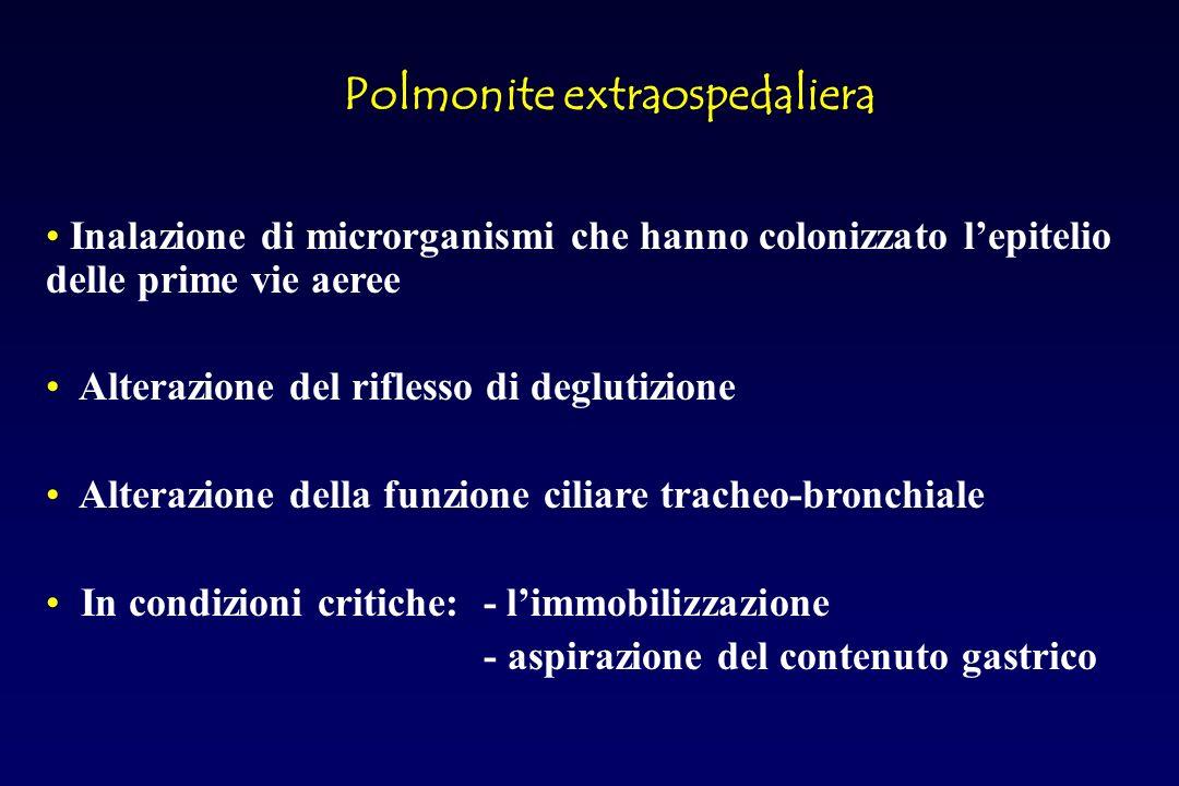 Polmonite da Streptococcus Pneumoniae ANATOMIA PATOLOGICA Epatizzazione grigia: degradazione dei neutrofili e globuli rossi, prosegue il deposito di fibrina.