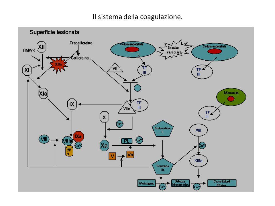 Il sistema della coagulazione.