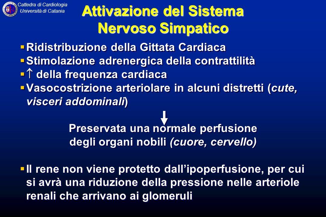 Cattedra di Cardiologia Università di Catania Ridistribuzione della Gittata Cardiaca Stimolazione adrenergica della contrattilità della frequenza card