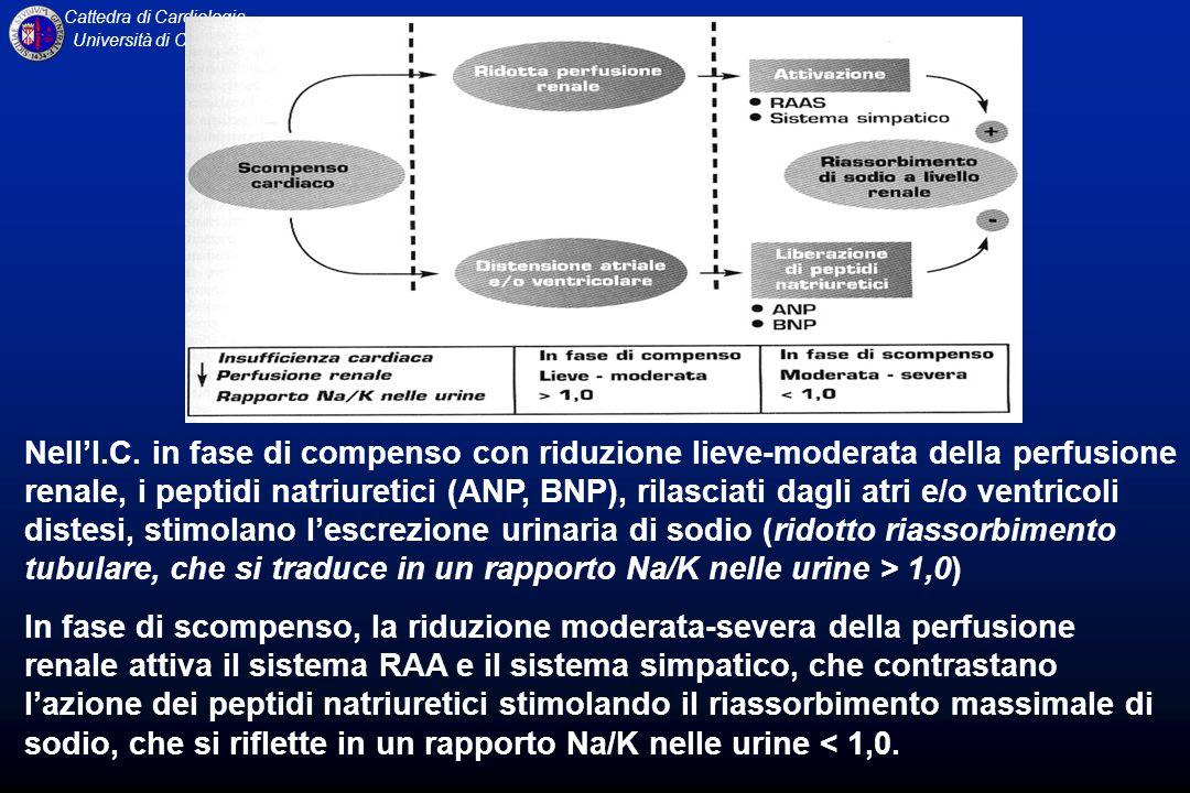 Cattedra di Cardiologia Università di Catania NellI.C. in fase di compenso con riduzione lieve-moderata della perfusione renale, i peptidi natriuretic