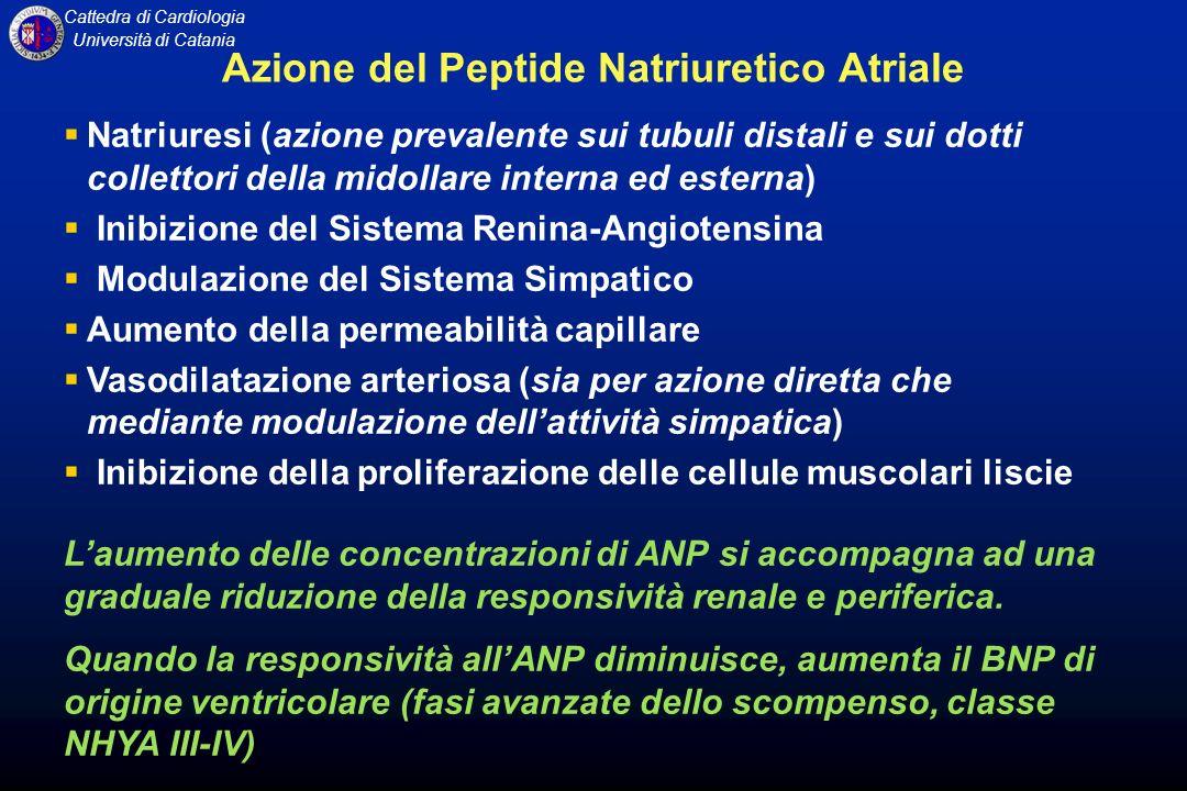 Cattedra di Cardiologia Università di Catania Azione del Peptide Natriuretico Atriale Natriuresi (azione prevalente sui tubuli distali e sui dotti col