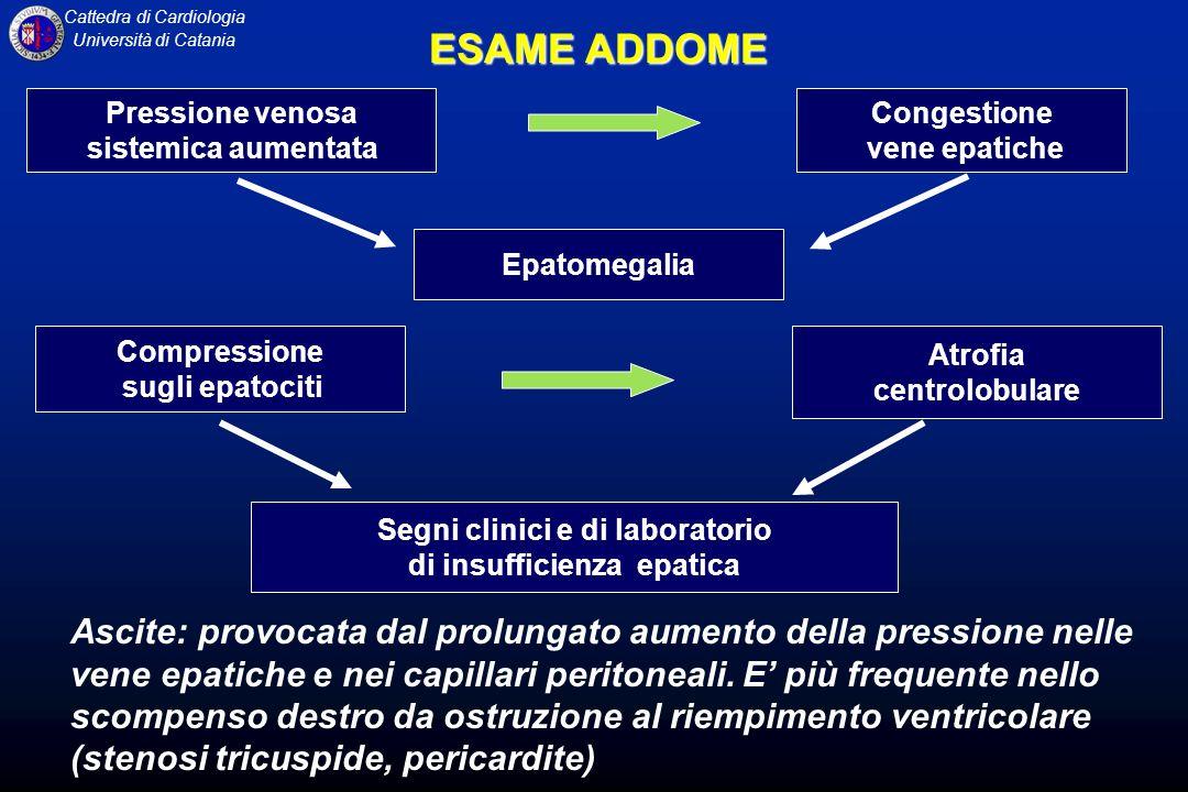 Cattedra di Cardiologia Università di Catania ESAME ADDOME Pressione venosa sistemica aumentata Congestione vene epatiche Epatomegalia Compressione su