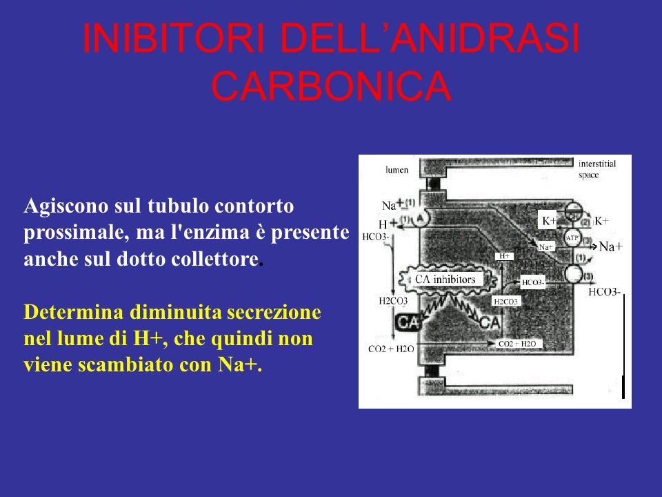 INIBITORI DELLANIDRASI CARBONICA Agiscono sul tubulo contorto prossimale, ma l'enzima è presente anche sul dotto collettore. Determina diminuita secre
