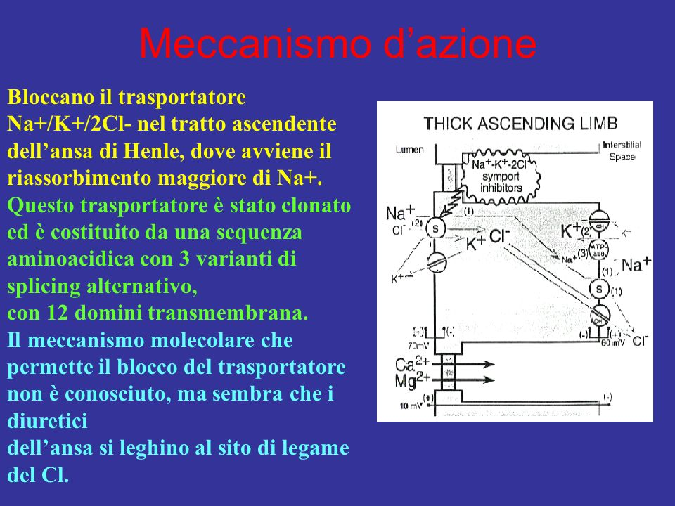 Meccanismo dazione Bloccano il trasportatore Na+/K+/2Cl- nel tratto ascendente dellansa di Henle, dove avviene il riassorbimento maggiore di Na+. Ques