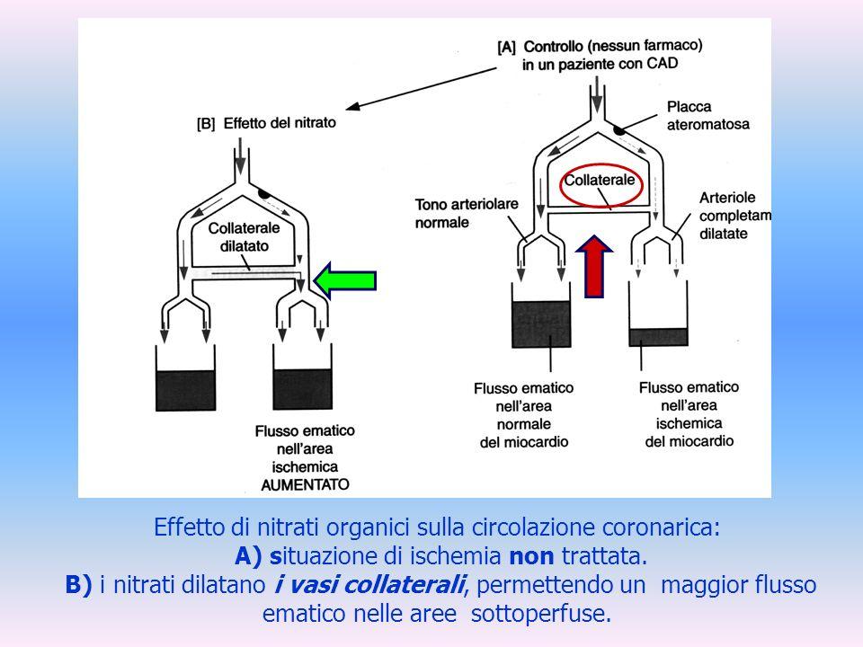 Effetto di nitrati organici sulla circolazione coronarica: A) situazione di ischemia non trattata. B) i nitrati dilatano i vasi collaterali, permetten