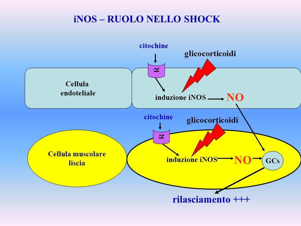 Cellula endoteliale induzione iNOS Cellula muscolare liscia induzione iNOS iNOS – RUOLO NELLO SHOCK R R citochine NO GCs rilasciamento +++ glicocortic