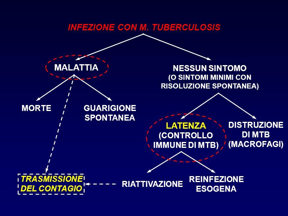 INFEZIONE CON M. TUBERCULOSIS MALATTIA MORTEGUARIGIONE SPONTANEA RIATTIVAZIONE NESSUN SINTOMO (O SINTOMI MINIMI CON RISOLUZIONE SPONTANEA) LATENZA (CO