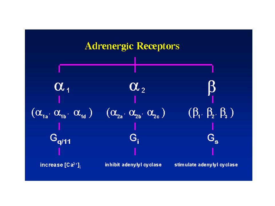 idrofiliaminmax lipofiliaminmax Propranololo (20) Alprenololo (10) Oxprenololo (2,5) Atenololo (0,02) Sotalolo (0,04) Celiprololo (0,05) Nadololo (0,07) Metoprololo (1) metabolismo epatico ( 100%) intenso metabolismo di primo passaggio variazioni inter-individuali emivita breve bassa biodisponibilità (10-50%) alto legame farmaco-proteico passaggio nel sistema nervoso centrale eliminazione prevalentemente renale (60-100%) minore assorbimento gastro-intestinale emivita più prolungata minori variazioni interindividuali basso legame farmaco-proteico CLASSIFICAZIONE FARMACOCINETICA DEI BETA BLOCCANTI
