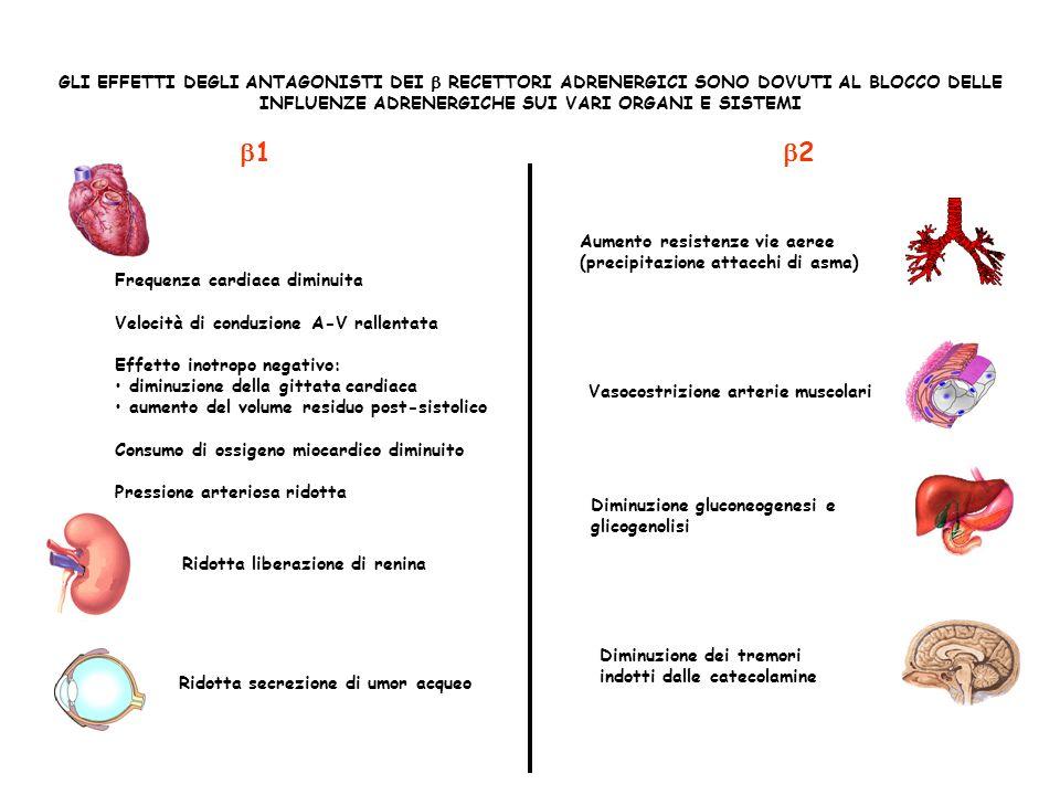 LE INDICAZIONI DEI BLOCCANTI INDICAZIONI CARDIOVASCOLARI Angina pectoris Prevenzione secondaria dellinfarto Insufficienza cardiaca Ipertensione Aritmie cardiache Cardiomiopatia ipertrofica INDICAZIONI EXTRACARDIACHE Tireotossicosi Manifestazioni somatiche dellansia Glaucoma Profilassi dellemicrania