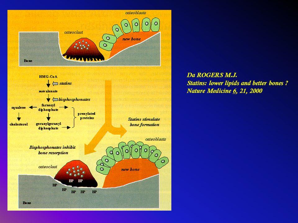 Da ROGERS M.J. Statins: lower lipids and better bones ? Nature Medicine 6, 21, 2000